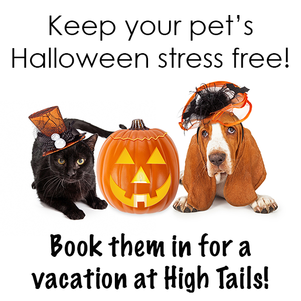 Keep your pet's halloween stress free with a stay at High Tails!