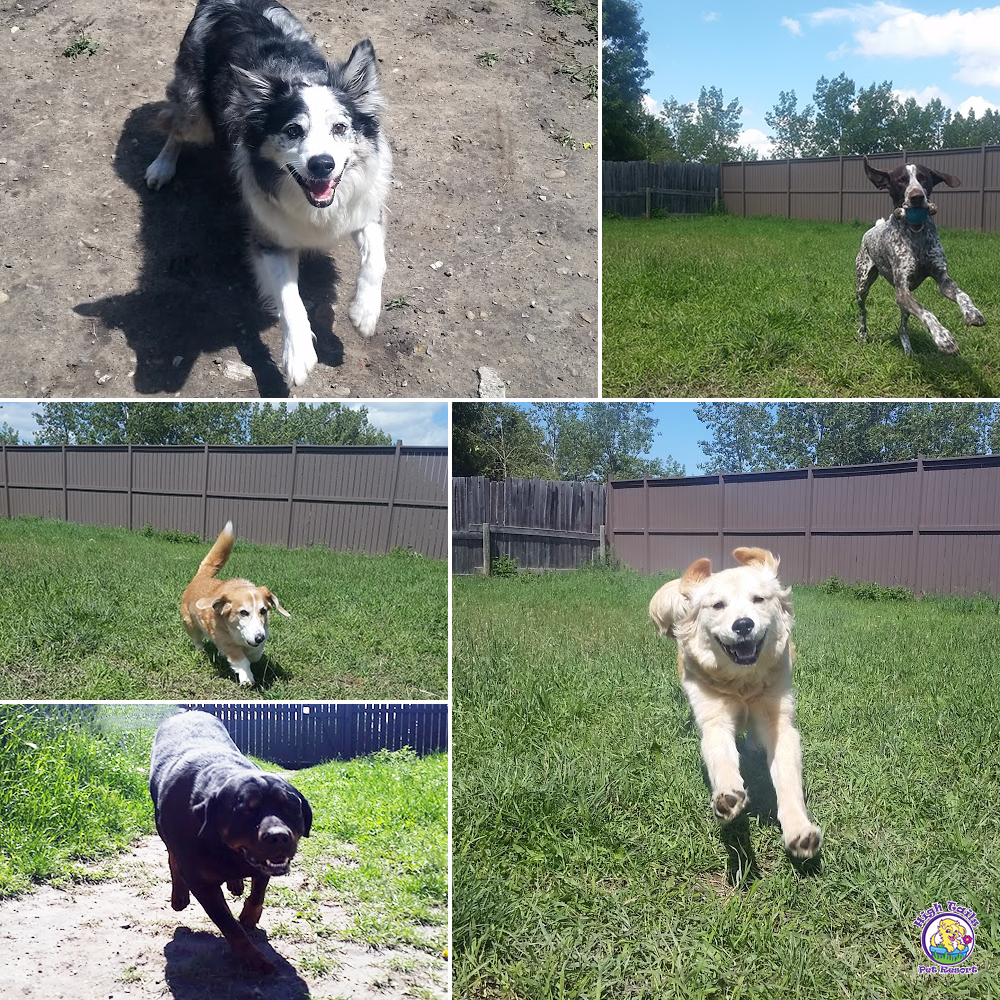 Dog Daycare at High Tails