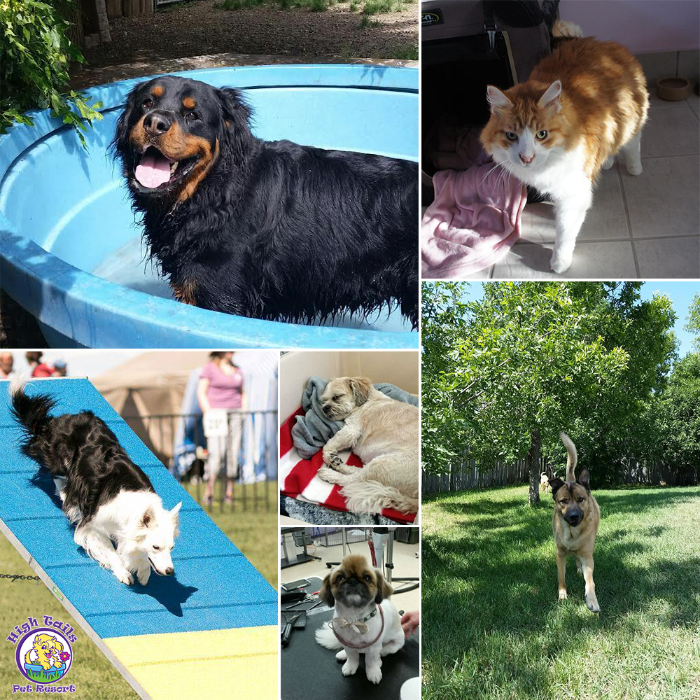 Pets have so much fun at High Tails Pet Resort!