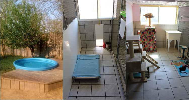Our Dog and Cat Suites