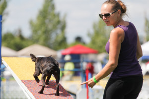 Andrea Norris Dog Trainer Obstacles